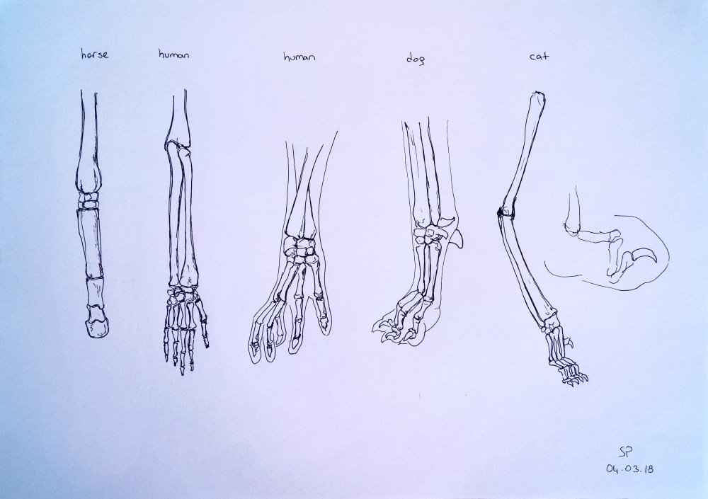 Animal Anatomy 2 – Stretched Paw