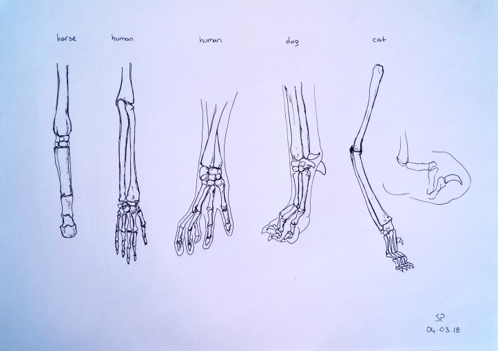 hand paw anatomy comparison