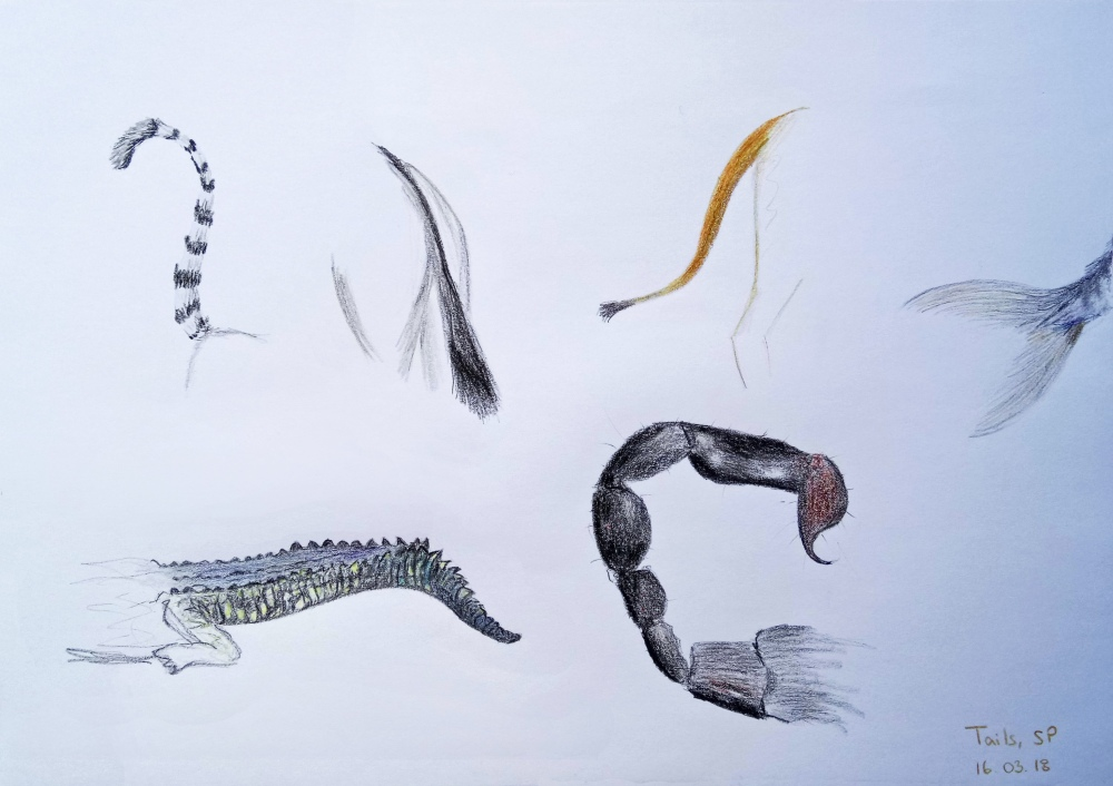tail drawing