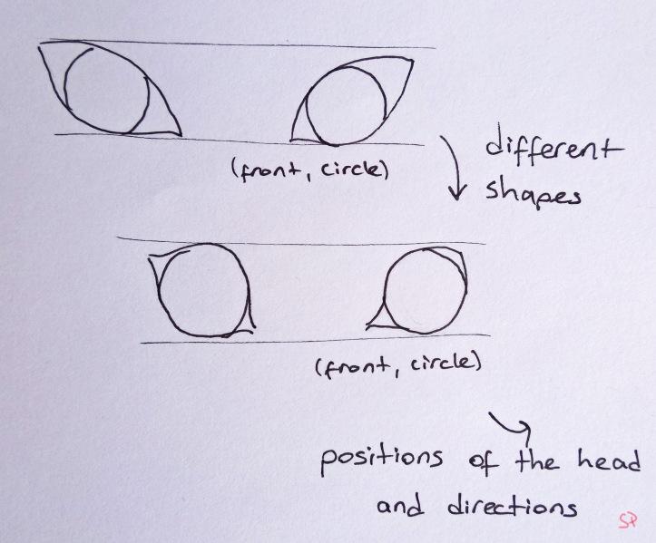 animal eye shapes