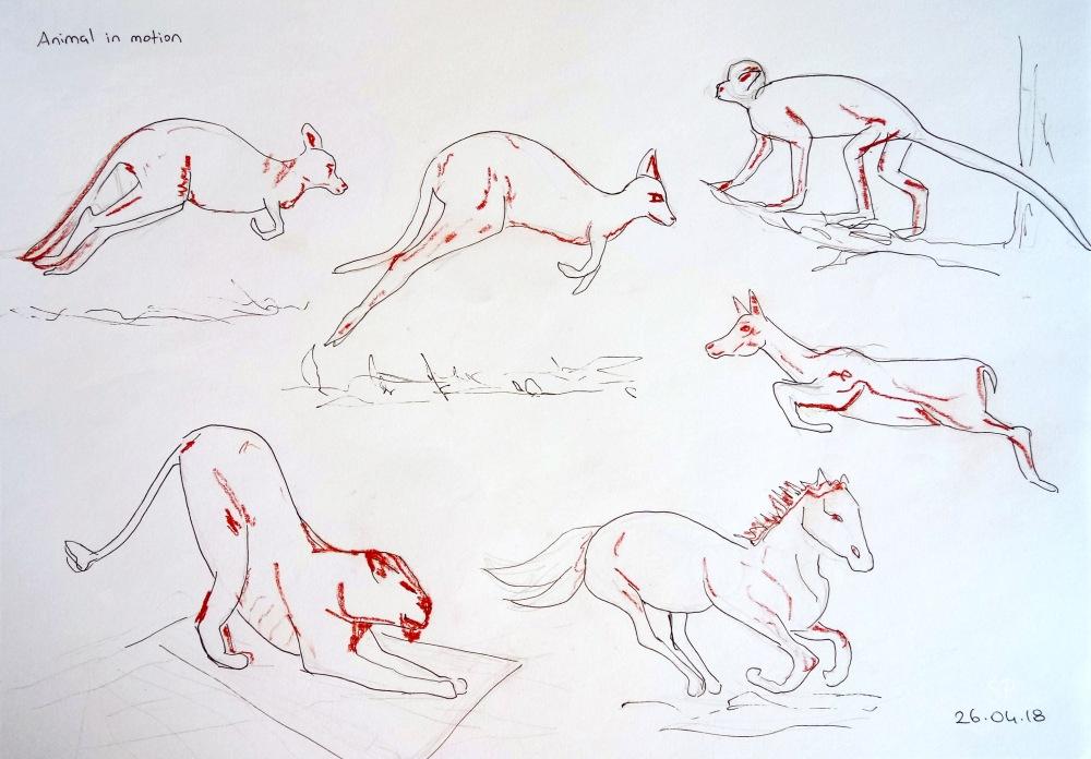 animal gesture motion drawings 5