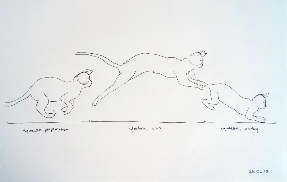 cat jump drawing