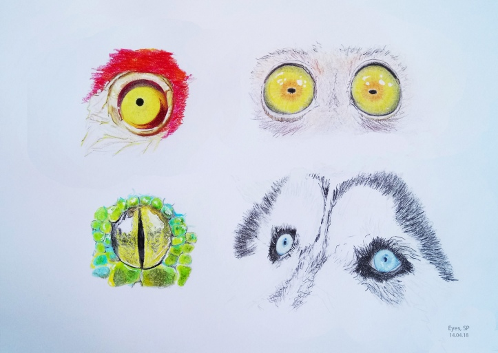 drawing animal eyes 5