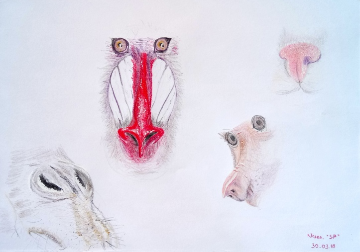 drawing animal noses 2
