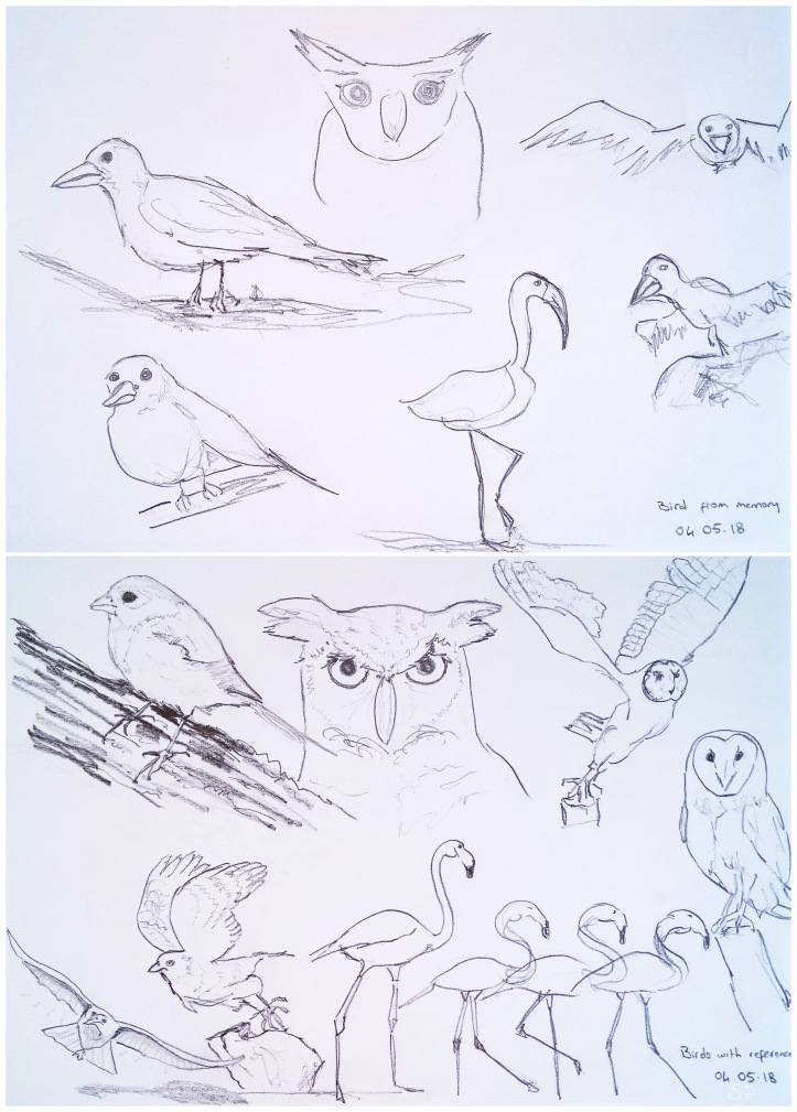 bird memory vs reference drawings