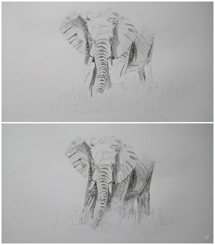 elephant drawing steps 3