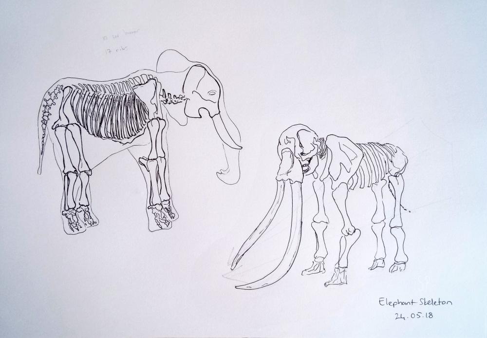 elephant skeleton drawing