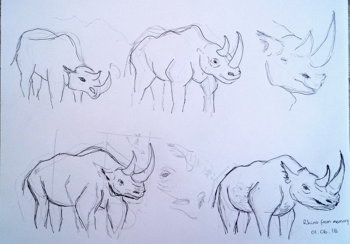 rhino drawing memory study