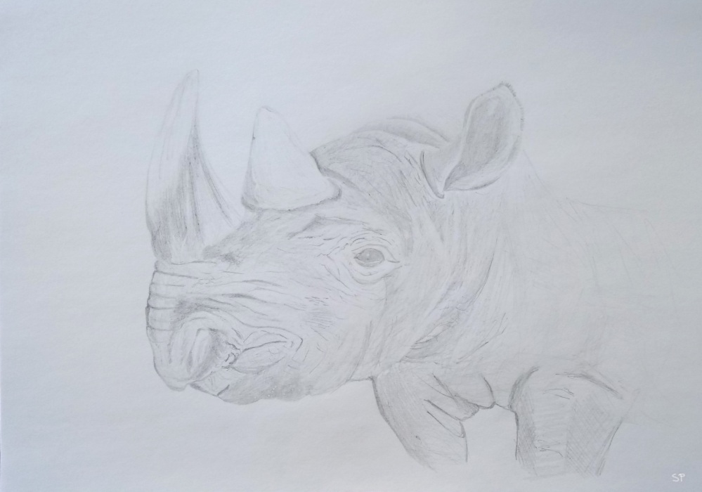 rhino drawing step 1