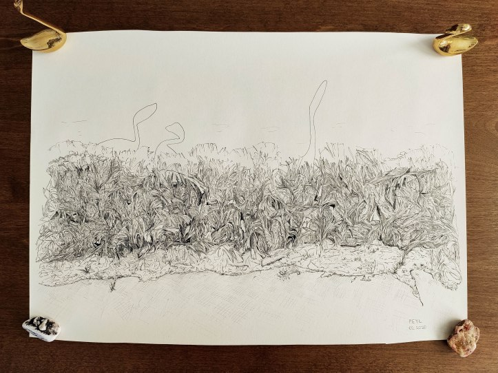 shrubs&swans ink drawing