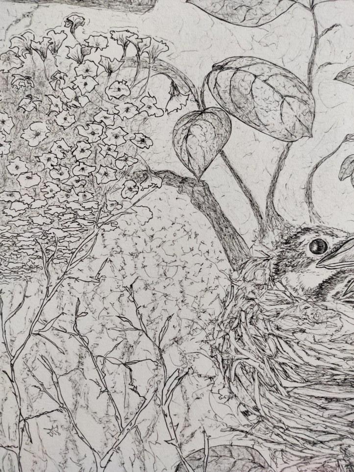 bird nest close up1
