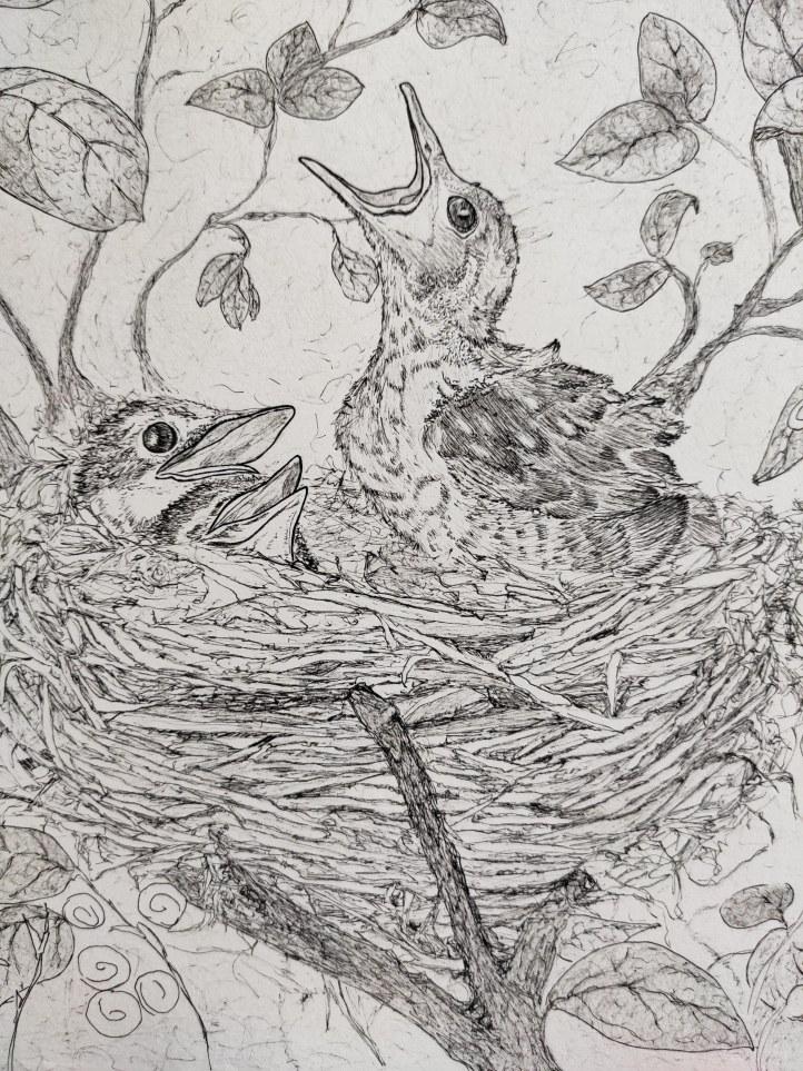 bird nest close up2
