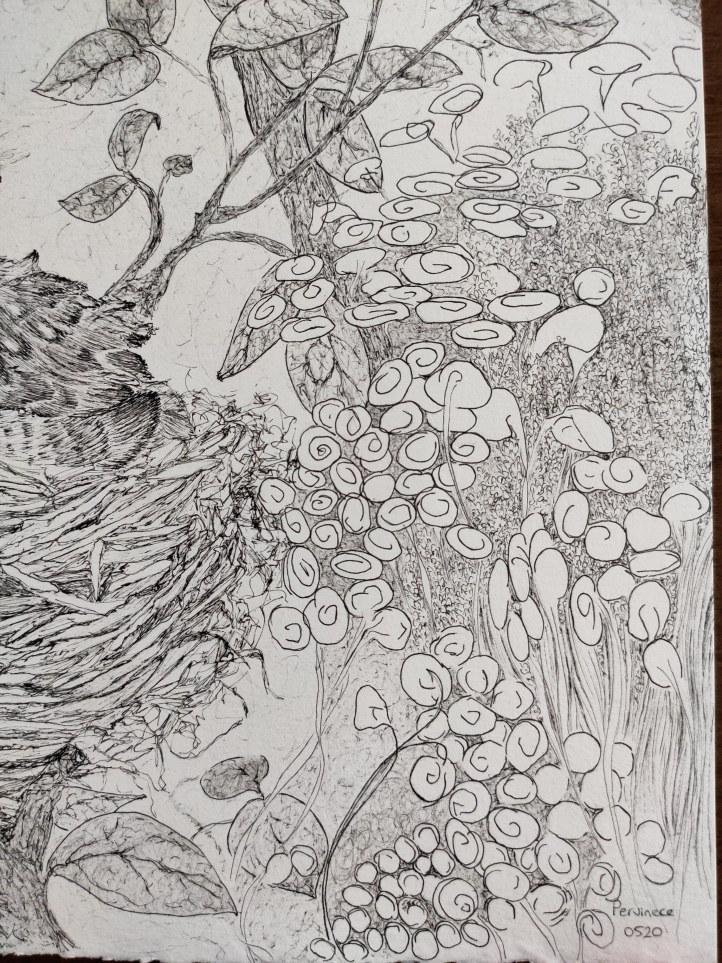 bird nest close up3
